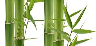 Bambusa šķiedras